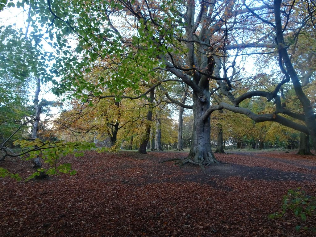 corstorphine hill edinburgh autumn trees leaves woodland